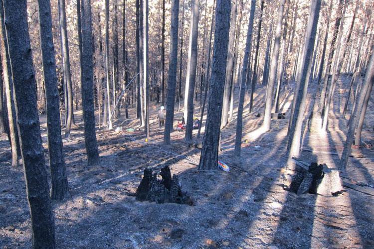 In Rim Fire's wake, fungi hold hope for rebirth