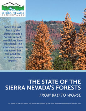Report: State of the Sierra Nevada's Forests… From Bad to Worse