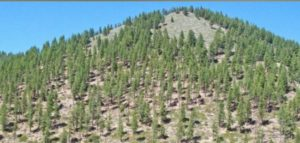 Symposium: Lessons Learned - Drought & Tree Mortality in the Sierra Nevada @ Wildland Fire Training & Conference Center Room | McClellan Park | California | United States